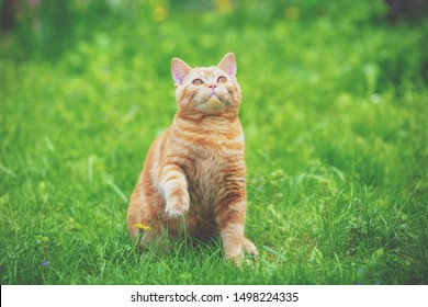 Cat on nature outdoors. Funny kitten with paw in the air in summer on a sunny day