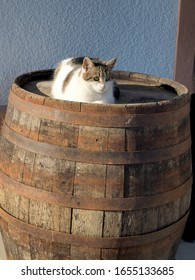 Cat on the old wooden barrel