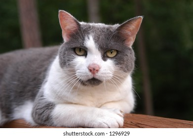 Cat on an outside deck with that all knowing stare all cats are blessed with.