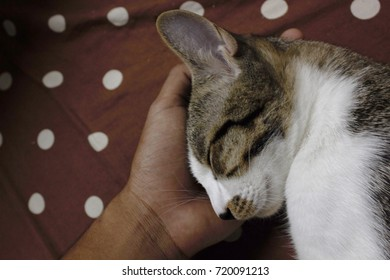 Cat on its owner hand