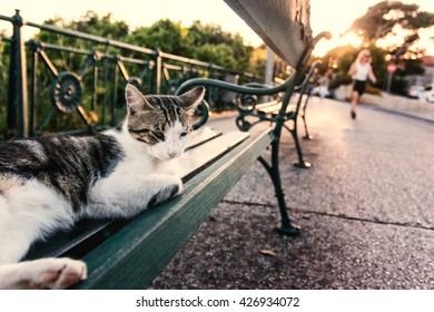 Cat on park bench in Dubrovnik