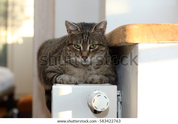 Cat on the radiator, warm, cat relaxing
