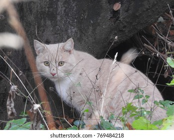 Cat on a ramble through the forest.
