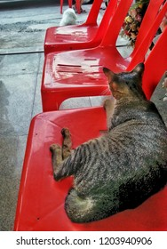 cat on red chair.