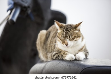 Cat on a resting on a motorbike