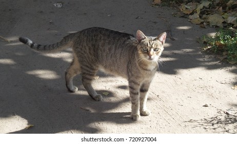 cat on a road