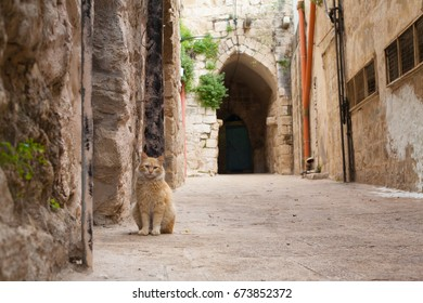 Cat on the Road in Nablus Israel Stone Road Arch Background
