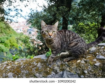cat on rock