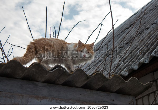 Cat on roof in the coutry side