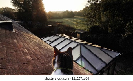 cat on roof looking down on garden