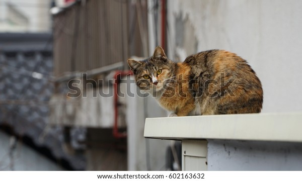 cat on the roof/cat on the roof-6