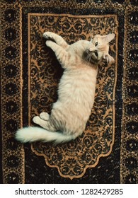 Cat on sajdah