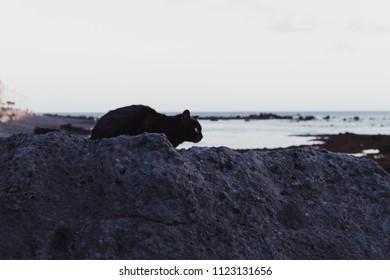Cat on the sea