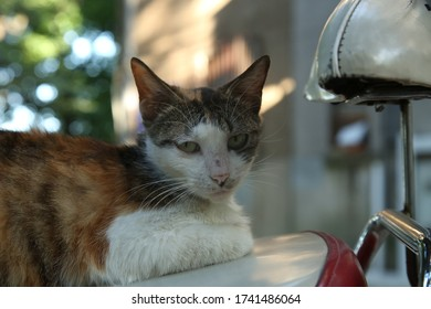 A cat on the seat of a scooter
