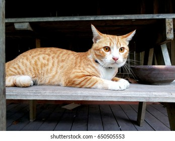 cat on stair
