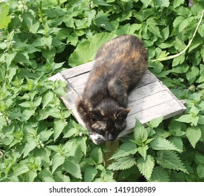 Cat on a stool surrounded by nettle