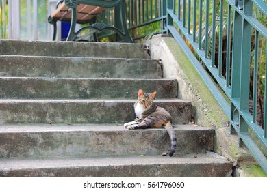 the cat on the street at hk