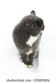 The cat on the street in the snow. Beautiful cat with eyes. First snow. Cold. Winter. Cat in the snow.