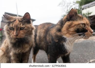 Cat on the street,Japan