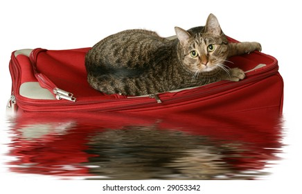 Cat on a suitcase with water reflection on a white background
