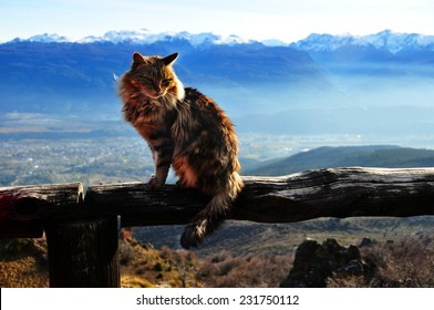 Cat on the summit of the mountain in Argentina, Bolson