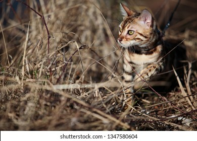 Cat on a sunny spring day
