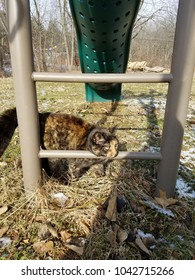 Cat on a Swingset