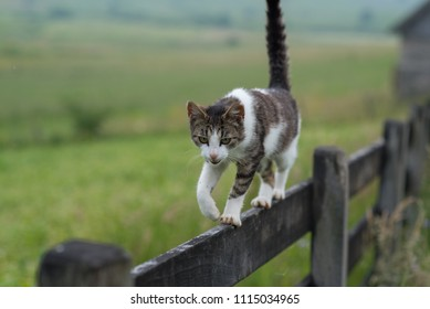 cat on tin wooden fence