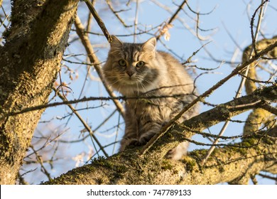 Cat on a tree after a dog was running after her
