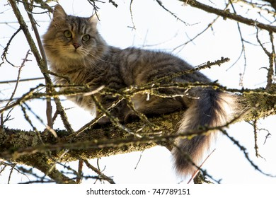 Cat on a tree after a dog was runnig after her