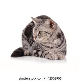 cat on white background.