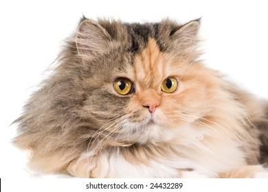 Cat on white background. isolated.