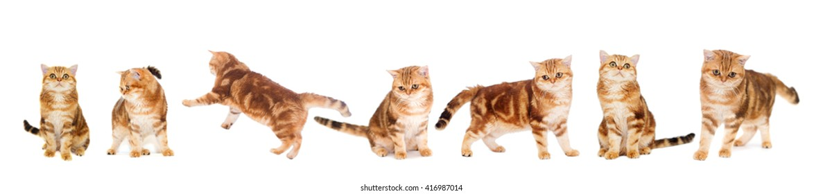 Cat on a white background isolated