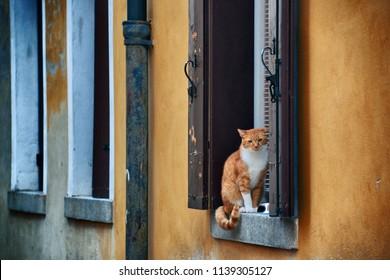 Cat on window in Venice, Italy