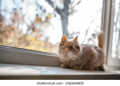 cat on the windowsill looks out the window