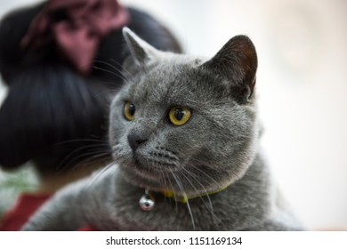 Cat on the woman shoulder