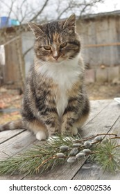 Cat on a wooden table with a sprig of willows and spruce