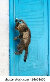 The cat opens a door