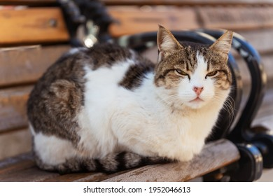 Cat outdoor in Istanbul. Stray cats in Turkey. Street cat close-up
