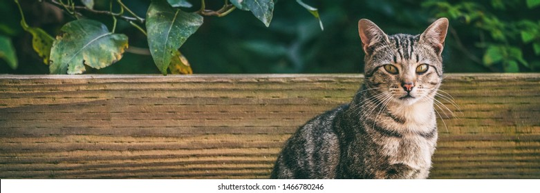 Cat outside - house pet or street cats panoramic banner background.