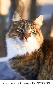 Cat outside in sunny day- house cat or street cat, feral cats outdoors.