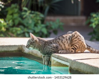 Cat over the pool with blue water. Holiday background. Relaxing vacation concept. Senegal. Africa.
