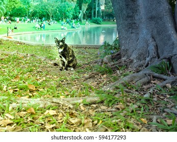 Cat in a park