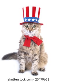 The cat with a patriotic hat