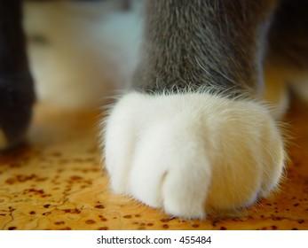 Cat paw, macro