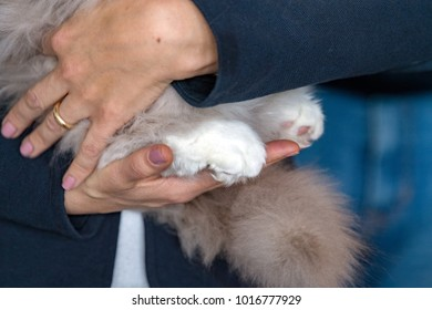 cat paw on human hand detail