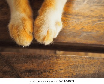 Cat paw on wooden,Closeup cat paw on wooden background.Cat foot,Paw of cat vintage