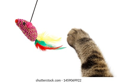Cat paw playing with a toy mouse, isolated on white background