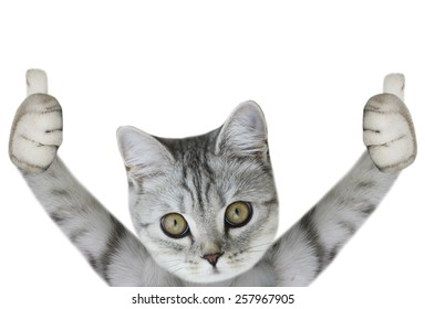 cat paws up