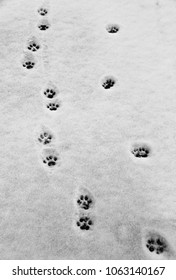 The cat paw's footprint or pad on snow.